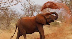 Dibujos-de-Elefantes